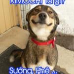 Kimochi là gì? Ý nghĩa từ Kimochi mà bạn không ngời đến